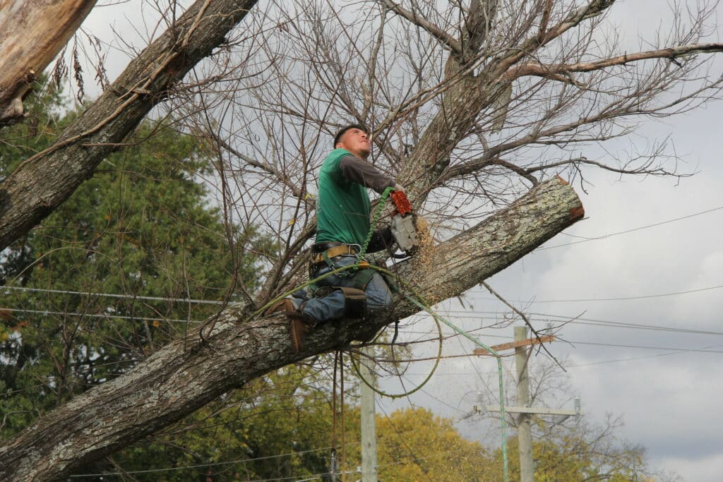 The Dos and Don'ts of Pruning Your Tree