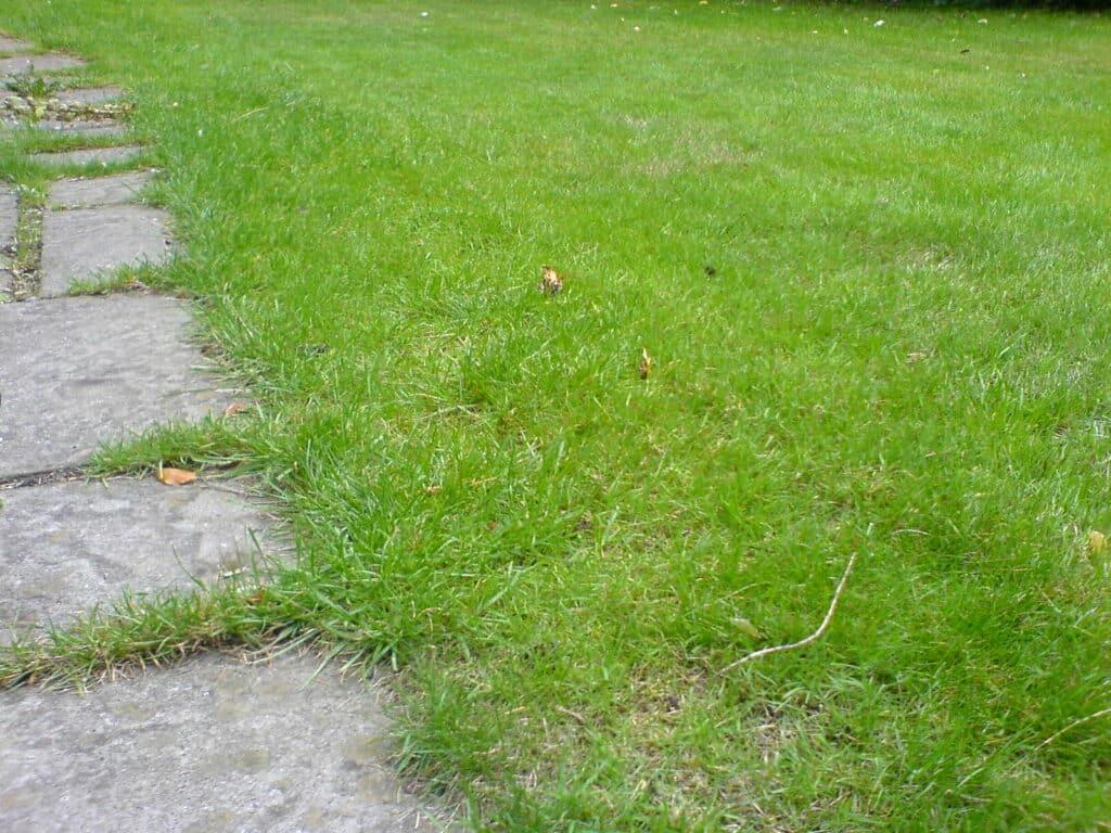 Buyer's Guide To Zero Turn Lawn Mowers
