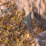 how to rake leaves