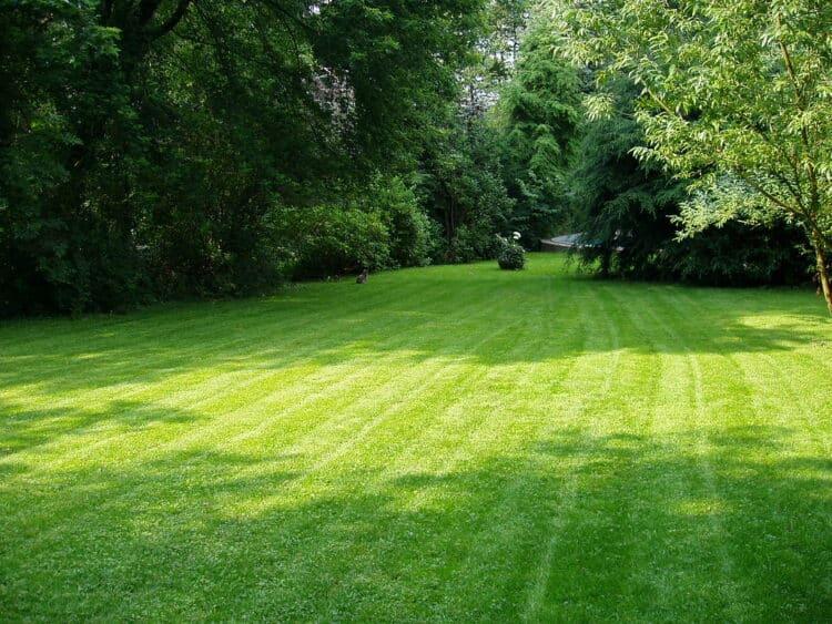 greenkeeper lawn tips