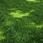 how to make grass thicker and fuller
