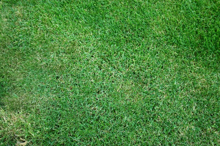 does grass spread