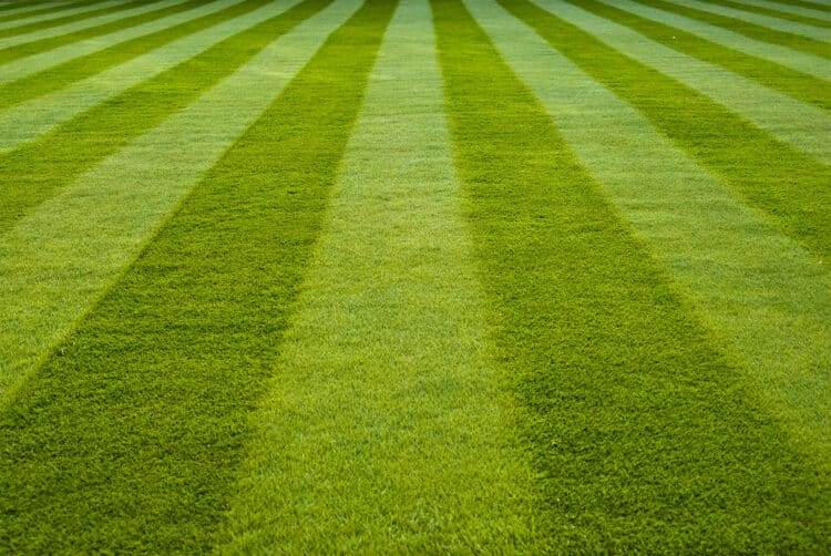 how to stripe a lawn